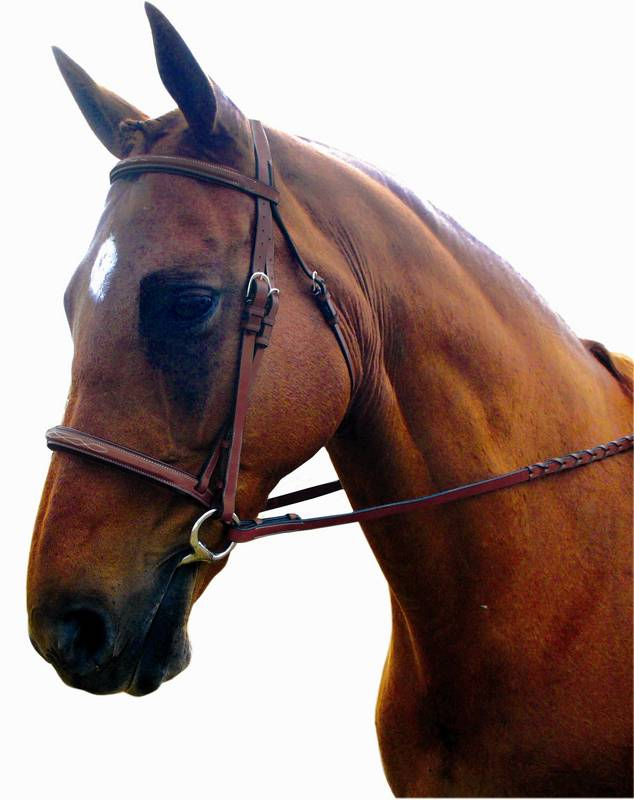 Kincade Raised Padded Fancy Stitch Bridle
