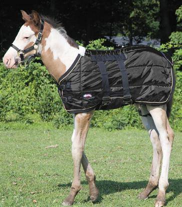 Weaver Foal Midweight Stable Blanket