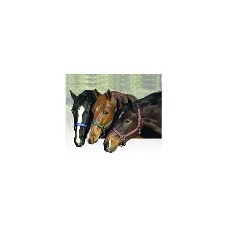Centaur Replacement Break Away Halter Fuse