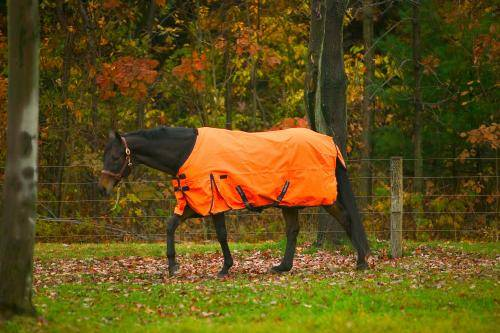 TuffRider 600D Medium Weight Turnout Horse Blanket
