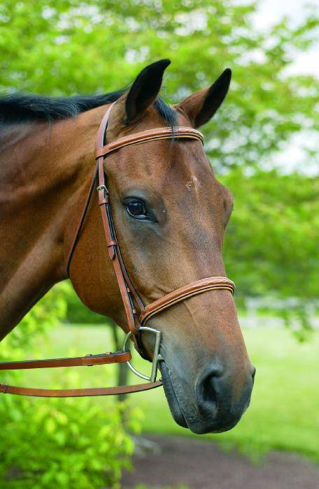 Henri de Rivel Fancy Raised Padded Bridle