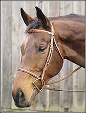 Henri de Rivel Plain Raised Bridle
