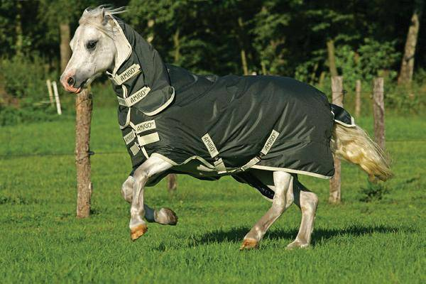 Amigo Bravo-12 by Horseware Pony Medium Weight Turnout Blanket