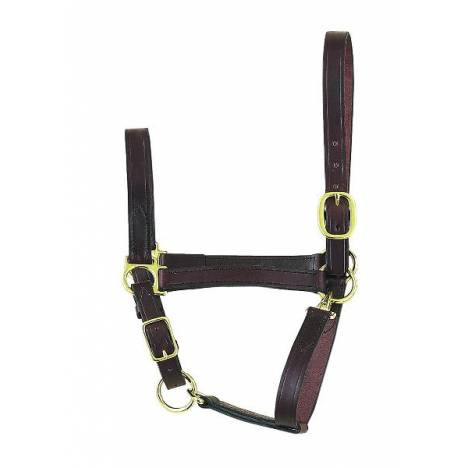 Perris Leather Collection Economy Leather Halter