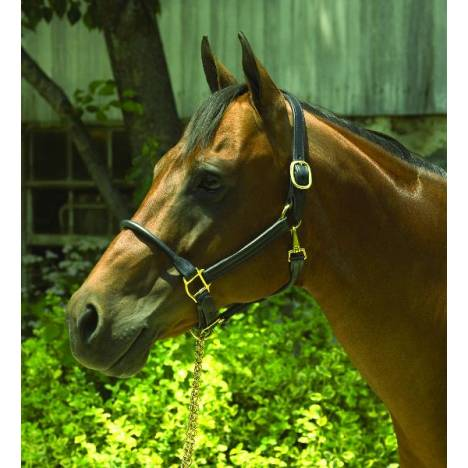 Perris Rolled Nose 1in Leather Halter