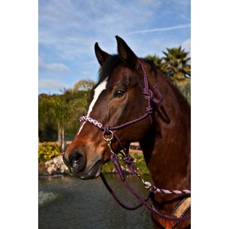 Kensington Rope Halter/Side Pull
