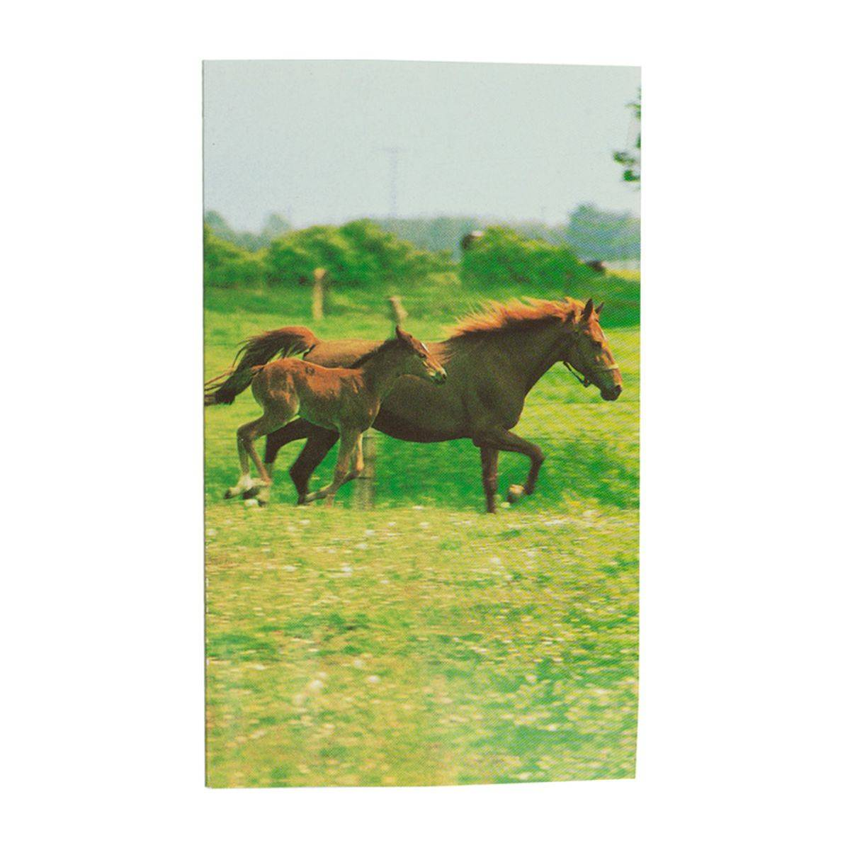 Horze Mare and Foal Notebook
