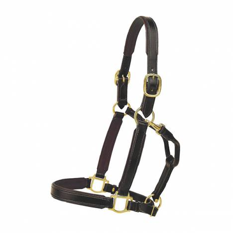 TORY LEATHER 1'' Padded Halter with Brass Hardware