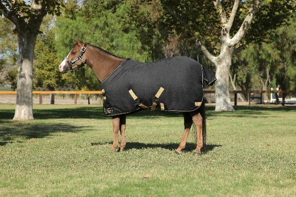 Kensington Medium Weight Turnout Blanket - Pony