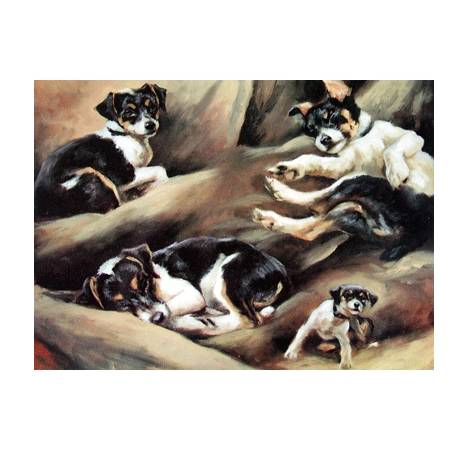 Just Getting Comfortable (Jack Russell) Blank Greeting Cards - 6 Pack