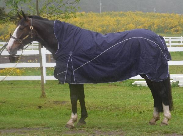 EOUS Madrid Midweight Turnout Blanket