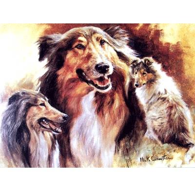 Rough Collies Blank Greeting Cards - 6 Pack