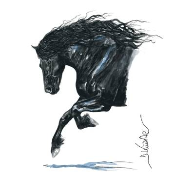 Onyx (Friesian) By: Jan Kunster, Matted
