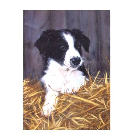 Contented (Border Collie) Blank Greeting Cards - 6 Pack
