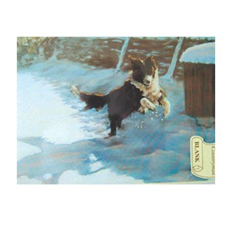 Snow, Sun and Fun (Border Collie) Blank Greeting Cards - 6 Pack