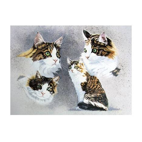 Tortoiseshell Blank Greeting Cards - 6 Pack