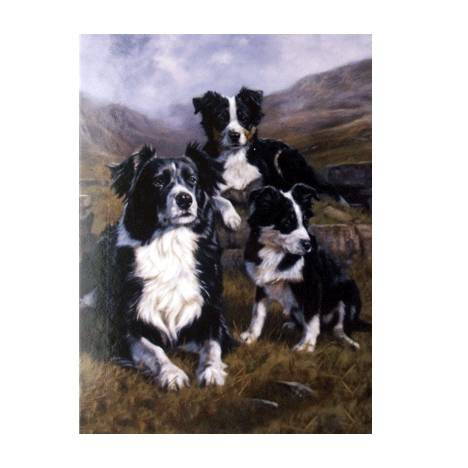 The Apprentices (Border Collie) Blank Greeting Cards - 6 Pack