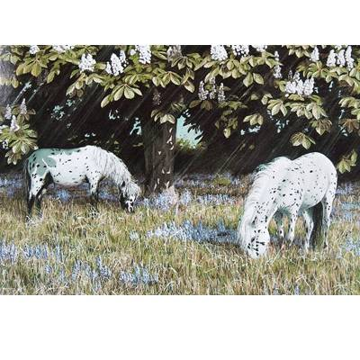 Bluebell Time (Spotted Ponies) Blank Greeting Cards - 6 Pack