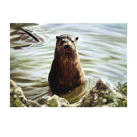 The Otter Blank Greeting Cards - 6 Pack
