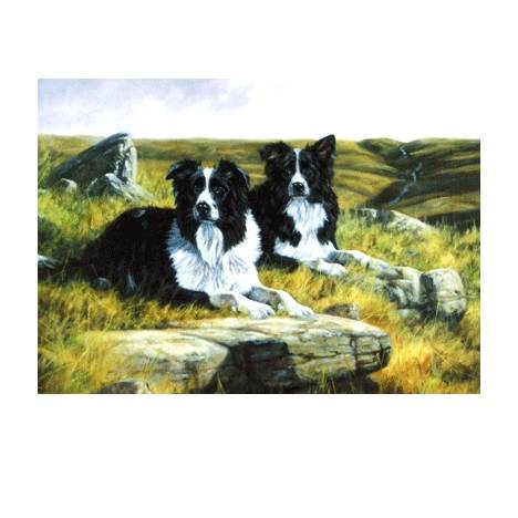 Waiting for the Whistle (Border Collie) Blank Greeting Cards - 6 Pack