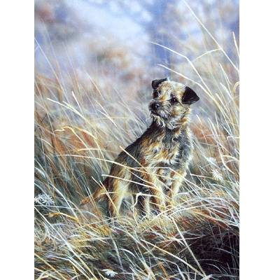 Where (Border Terrier) Blank Greeting Cards - 6 Pack