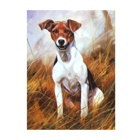 The Scrapper (Jack Russell) Blank Greeting Cards - 6 Pack