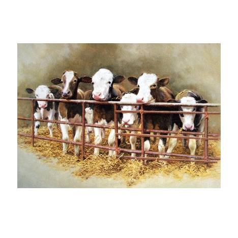 Waiting for Breakfast (Cow) Blank Greeting Cards - 6 Pack