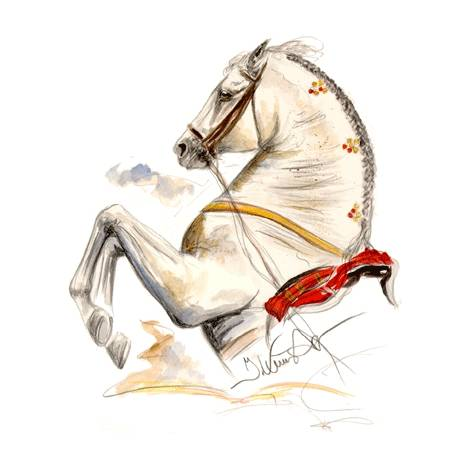 Ayamonte, Lipizzan Art Print by Jan Kunster