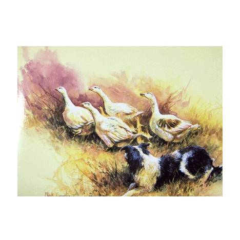 Getting Some Practice (Border Collie) Blank Greeting Cards - 6 Pack
