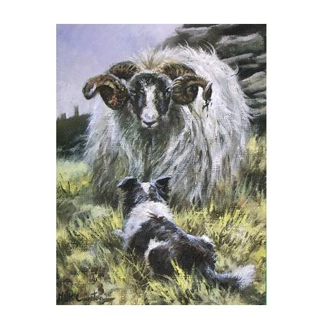 Confrontation (Border Collie) Blank Greeting Cards - 6 Pack