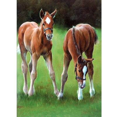Horses - Chestnuts Blank Greeting Cards - 6 Pack