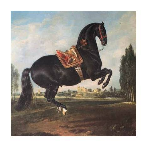 Black Horse in Courbette Blank Greeting Cards - 6 Pack