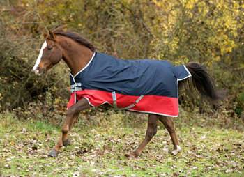 Amigo Mio Turnout Blanket - Medium Weight