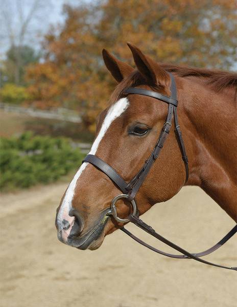 Shires Hunt Bridle
