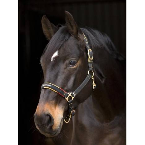 Rambo New Market Fashion Halter