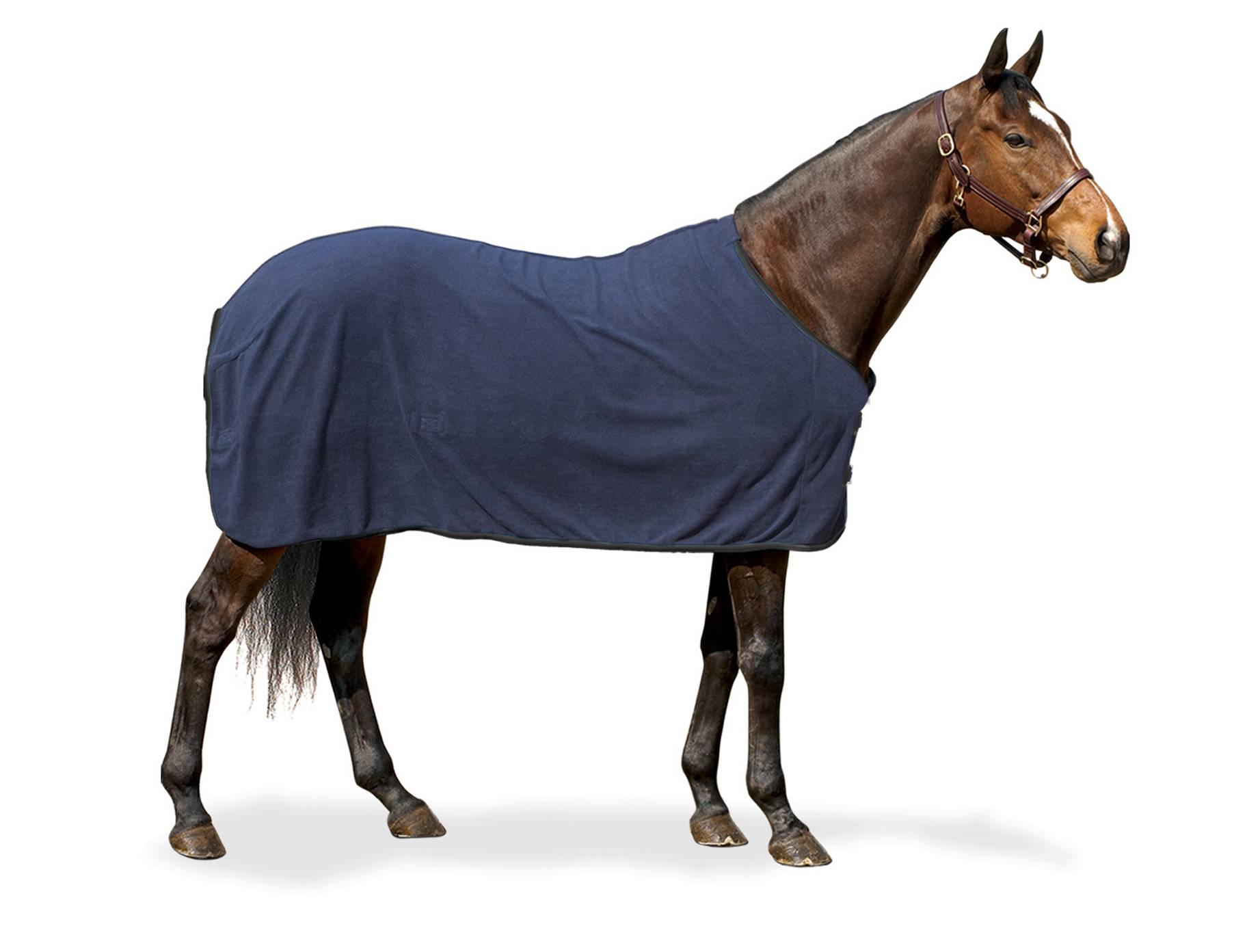 Centaur 220g Fleece Sheet - Solid
