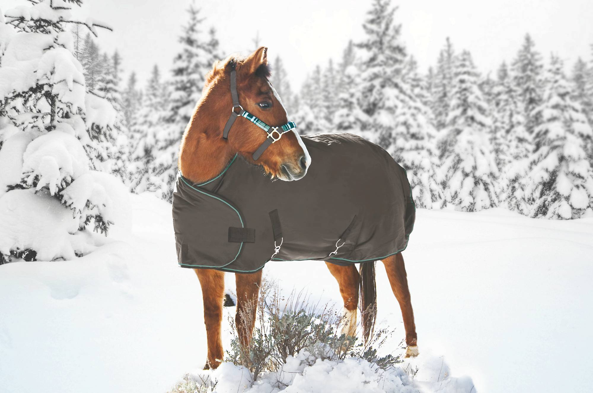 Kensington All Around Yearling Turnout Blanket 1200D 180g