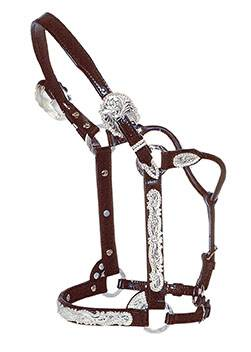 Circle Y Silver Berry Edge Show Halter