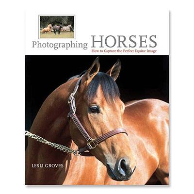 Photographing Horses: How To Capture The Perfect Equine Image