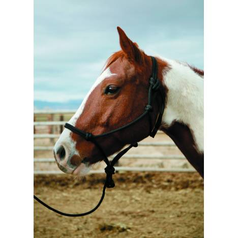 Colorado Saddlery Knotted Halter & 10' Lead
