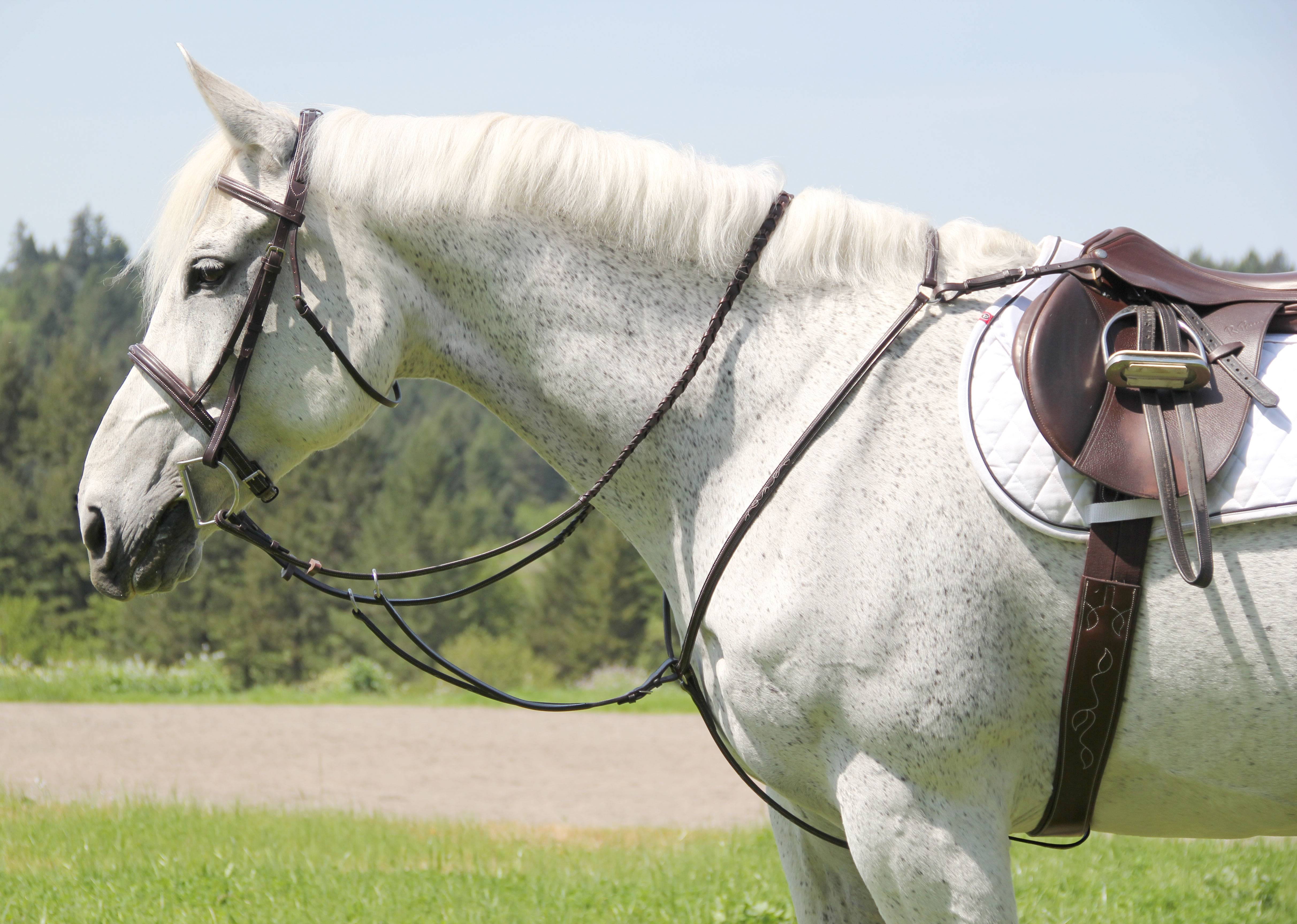 Toklat Silverleaf Plain Raised Breastplate With Running Attachment