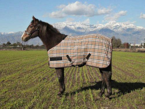 Kensington Adjustable Protective Fly Sheet - Yearling/Pony