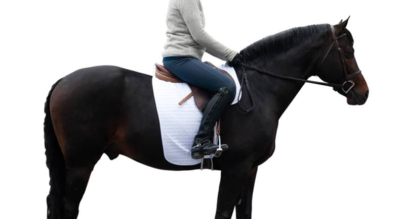 Ovation No Mark Pony Saddle Pad