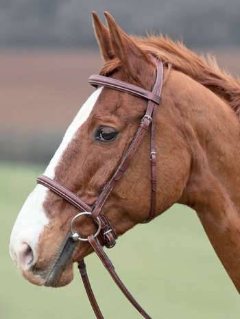 Shires Lexington Snaffle Bridle