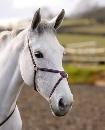 Shires Fancy Stitch Figure 8 Noseband