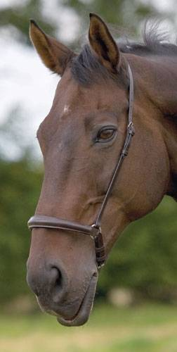 "Shires Plain Cavesson Noseband -1.5"", Black"