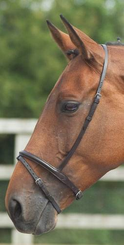 Outlet - Shires Flash Noseband, Pony, Dark Havana