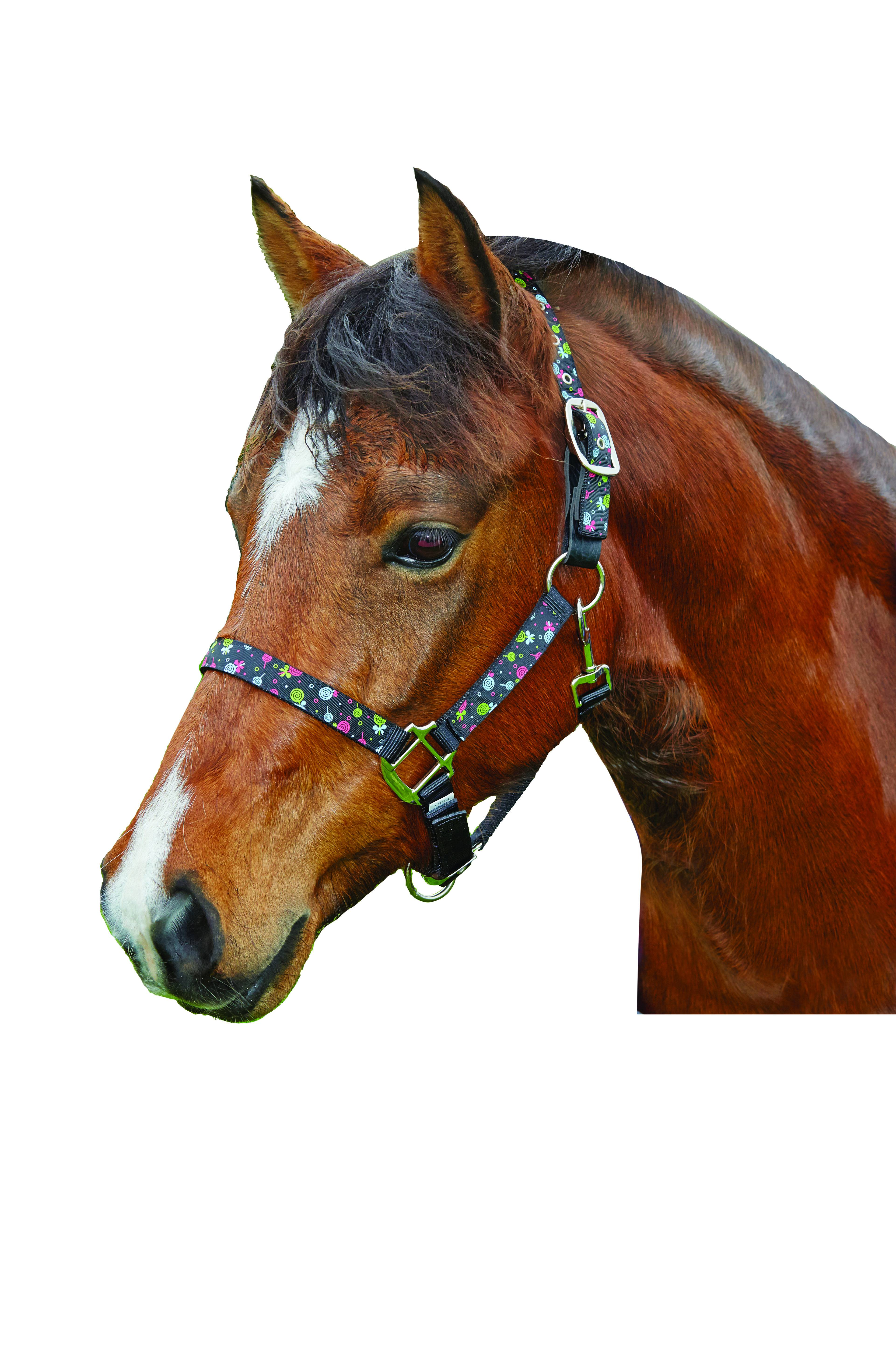 Roma Ribbon Breakaway Lollipop Halter