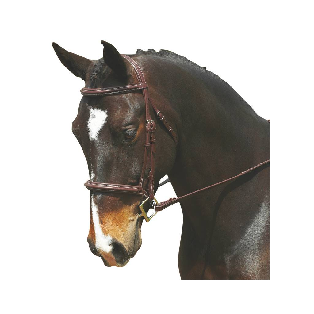 Collegiate Comfort Crown Raised Padded Bridle