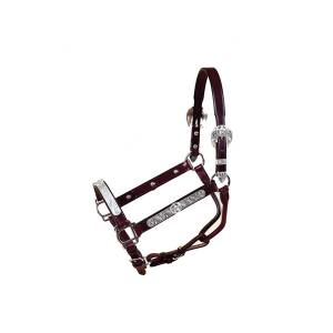 Tory Leather Texas Start Plate Show Halter with Lead